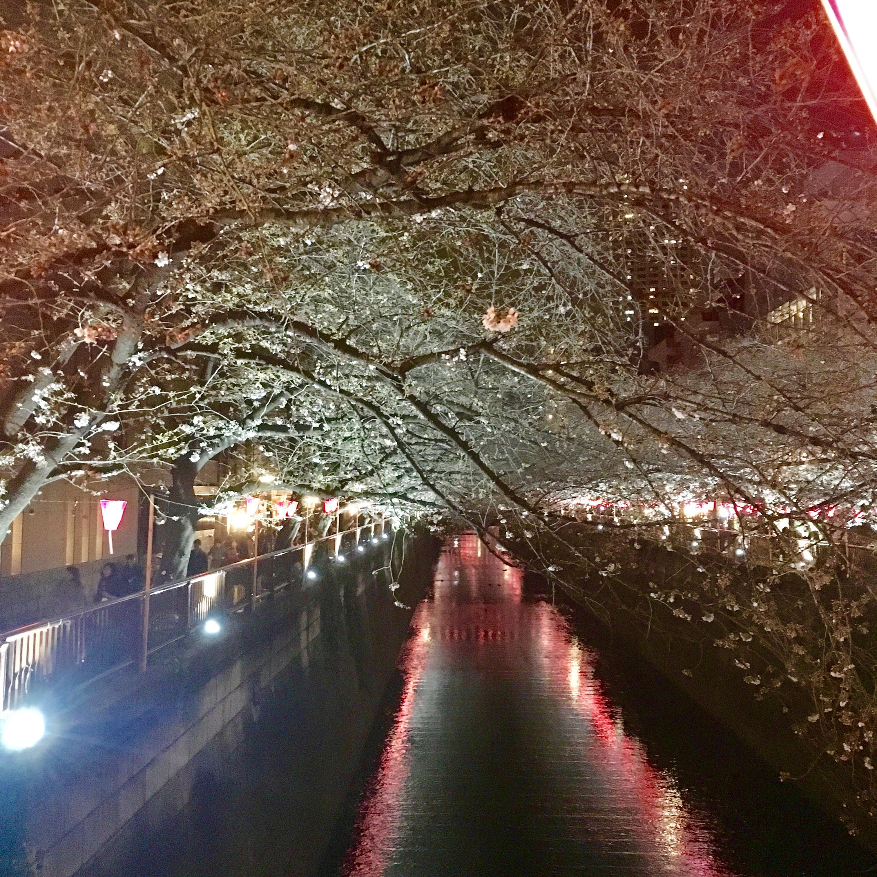 ☆中目黒 桜祭り☆